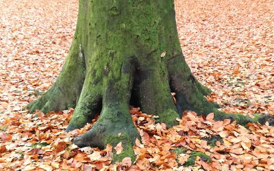 Over bomen knuffelen en zweverigheid